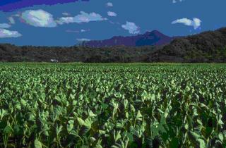 農耕民族と日本製品の品質との関係